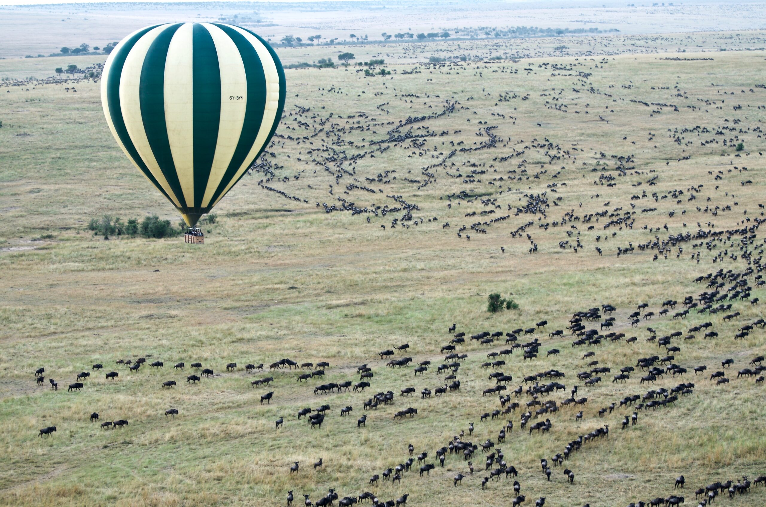 Great Migration from Hot Air Balloon